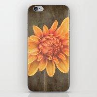 Orange Dahlia iPhone & iPod Skin