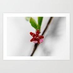 Red peach blossom Art Print