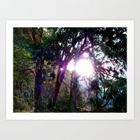 Trees at Lake Crescent Art Print