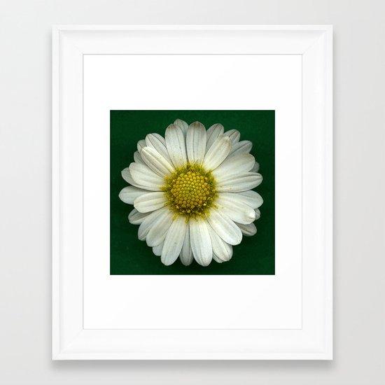 Single White Chrysanthemum Framed Art Print