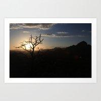 Skimpy Tree Glows Art Print