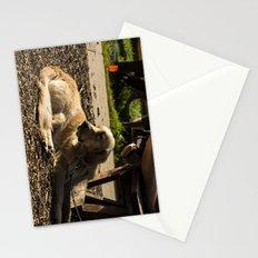 Dog's Life Stationery Cards