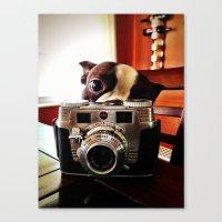 Terrier Has An Eye For P… Canvas Print