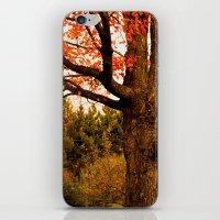 Autumn Lights iPhone & iPod Skin