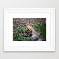 Canis Lupus Lupus Framed Art Print