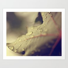 Drops on a Leaf Art Print