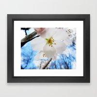 Cherry Blossom-1 Framed Art Print