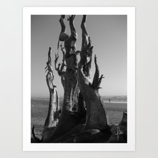 Driftwood Roots Art Print