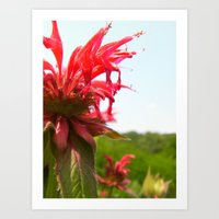 Spiked Red Flower Art Print