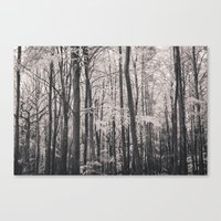 Deep In Woodland - Black… Canvas Print