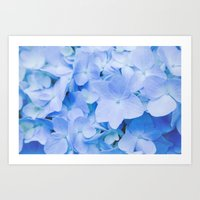 Hydrangea Macrophylla Art Print