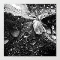 water drops XVII Canvas Print