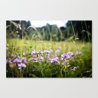 A Hint Of Purple Canvas Print