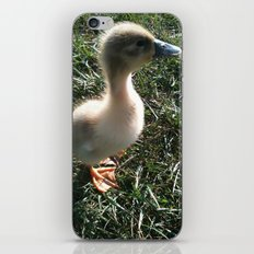 Duckling iPhone & iPod Skin