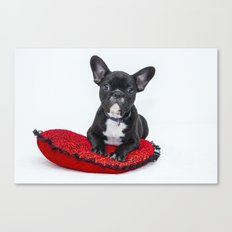Cutie Doggy  Canvas Print