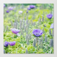Poppy Anemone Canvas Print