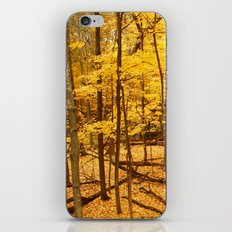 Sunset Forest iPhone & iPod Skin