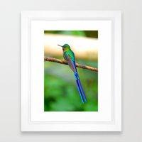 Ecuadorian Hummingbird Framed Art Print