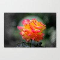 Rose 2138 Canvas Print