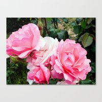 Rose #3 Canvas Print