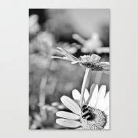 The flower and the bug Canvas Print