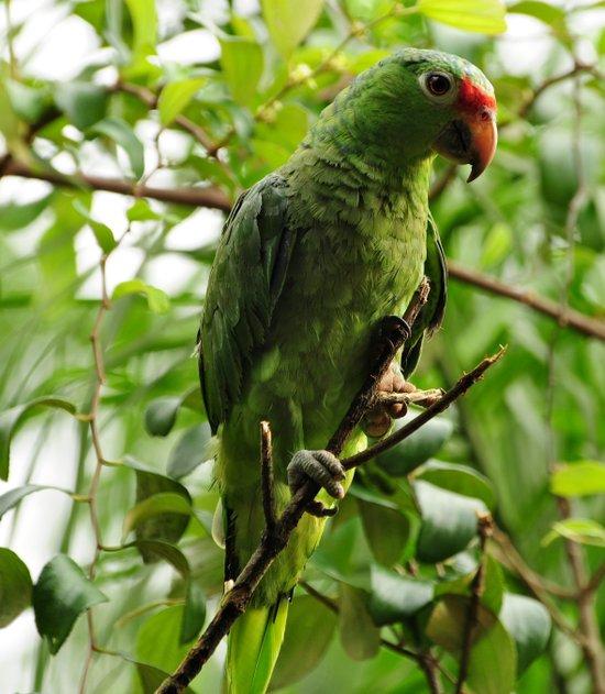 Parrot Portrait Art Print
