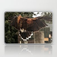 Red Tailed Hawk Laptop & iPad Skin