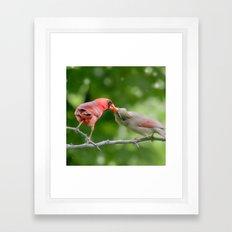 Cardinal Love Framed Art Print