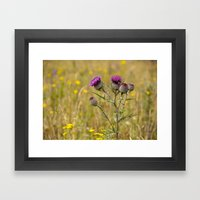 Thistle 5155 Framed Art Print
