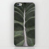 Money Plant iPhone & iPod Skin