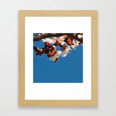 Spring 2013 04 Framed Art Print
