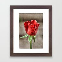Red Rose Red Framed Art Print