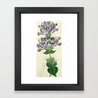 Framed Art Print featuring Edwards' Botanical Regis… by Esoteric Botanica