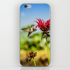 Ruby throated Hummingbird iPhone & iPod Skin