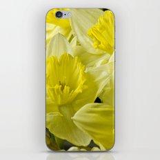 Simply Daffodils iPhone & iPod Skin