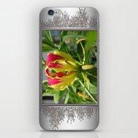 Gloriosa Rothschelidiana iPhone & iPod Skin