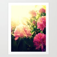 Rhododendron Resplendent Art Print