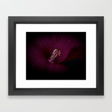 Red Rose Of Sharon Framed Art Print