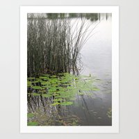 Lillypad tranquility Art Print