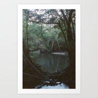 Drabby Swampy Creek Art Print