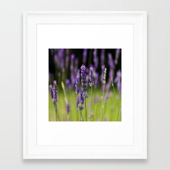 Field of Lavender Framed Art Print