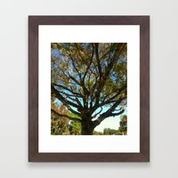 Sunset tree Framed Art Print