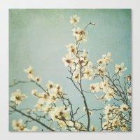 Magnolia blossoms. Mint Canvas Print
