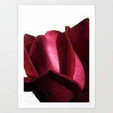 lovely rose Art Print