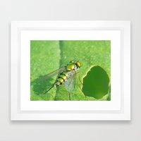 Bug On A Leaf Framed Art Print