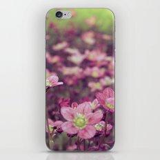 Pink Saxifrage iPhone & iPod Skin