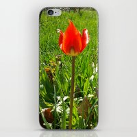 Red Tulip iPhone & iPod Skin