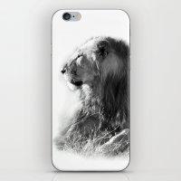Lion In The Sunshine iPhone & iPod Skin