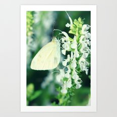 White Cabbage Butterfly On A Flower, Pieris rapae Art Print