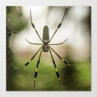 Autumn Spider Canvas Print